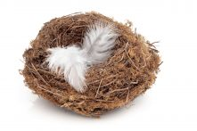 bigstock-Flown-The-Nest-8212078