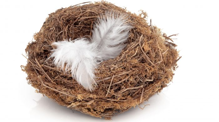 Adding Feathers To My Empty Nest